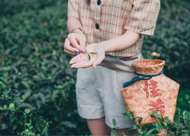 Jia Fang tea plantation