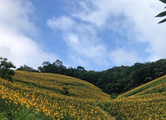 知本天山農場
